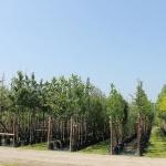 bomen-in-container
