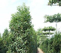 Bos- en haagplantsoen