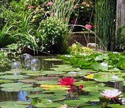 Waterplanten